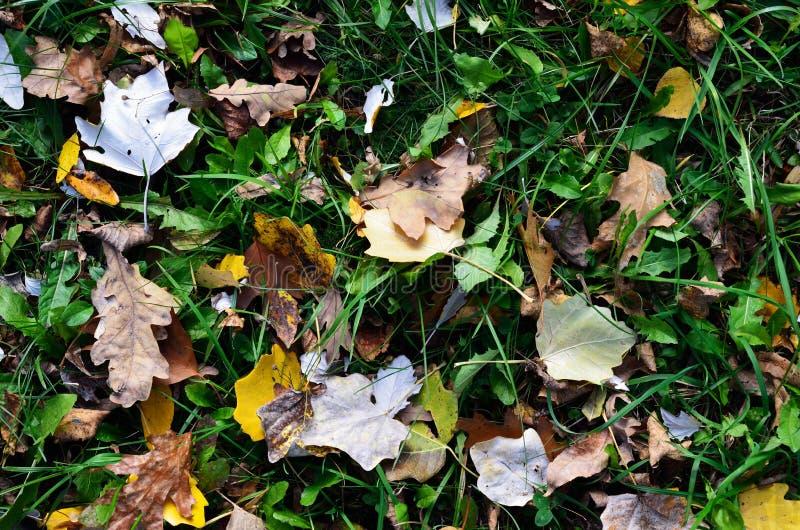 φθινοπωρινό έδαφος στοκ φωτογραφία με δικαίωμα ελεύθερης χρήσης
