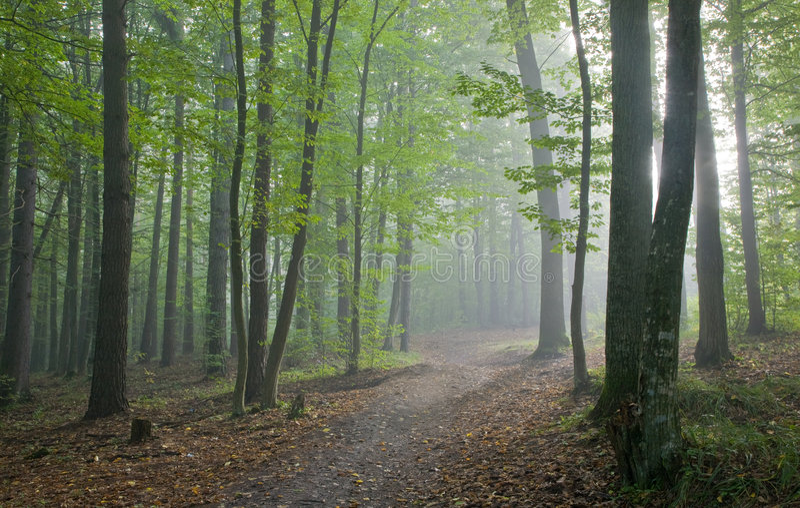 φθινοπωρινό δασικό misty μονο&pi στοκ φωτογραφίες