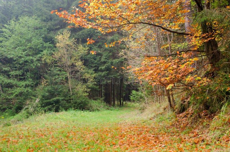 Φθινοπωρινό ζωηρόχρωμο δασικό τοπίο στοκ φωτογραφία