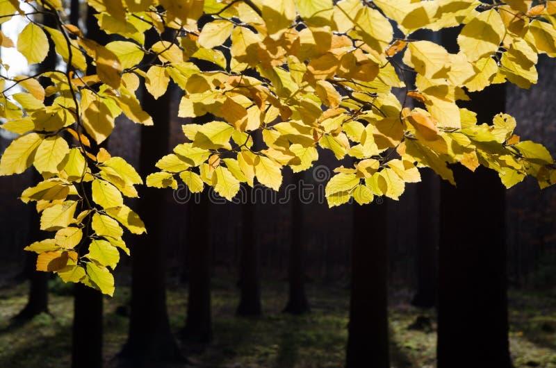 Φθινοπωρινό ζωηρόχρωμο δάσος στοκ εικόνες