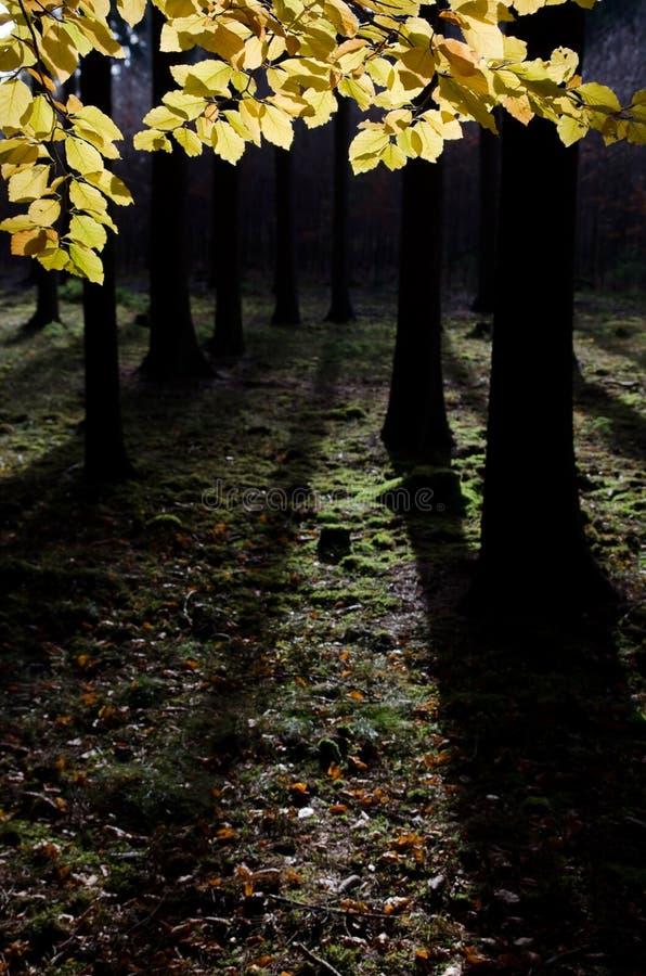 Φθινοπωρινό ζωηρόχρωμο δάσος στοκ εικόνες με δικαίωμα ελεύθερης χρήσης