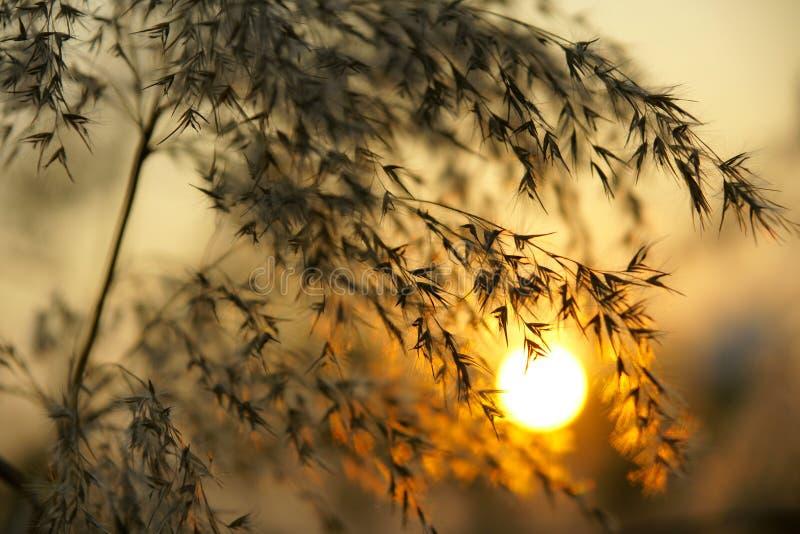 φθινοπωρινό ηλιοβασίλεμ& στοκ εικόνες
