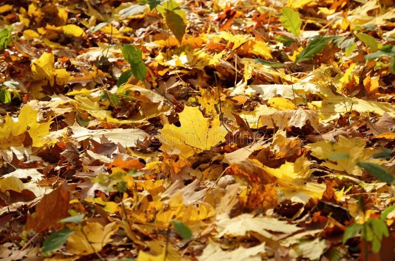 Φθινοπωρινό πάτωμα των πεσμένων φύλλων στοκ φωτογραφία με δικαίωμα ελεύθερης χρήσης