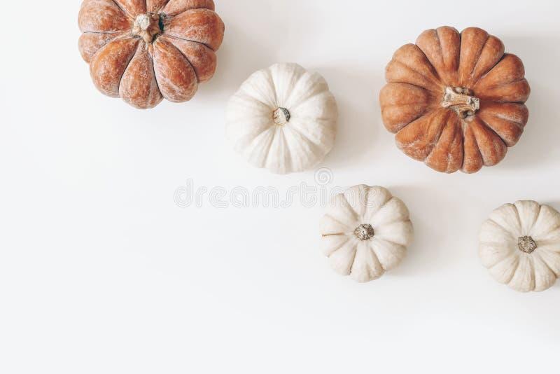 Φθινοπωρινό πλαίσιο από πορτοκαλί και λευκές κολοκύθες απομονωμένες στο φόντο των τραπεζιών Φθινόπωρο, Απόκριες, Ημέρα των Ευχαρι στοκ εικόνα με δικαίωμα ελεύθερης χρήσης