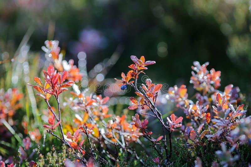 Φθινοπωρινό φόντο στοκ εικόνα με δικαίωμα ελεύθερης χρήσης