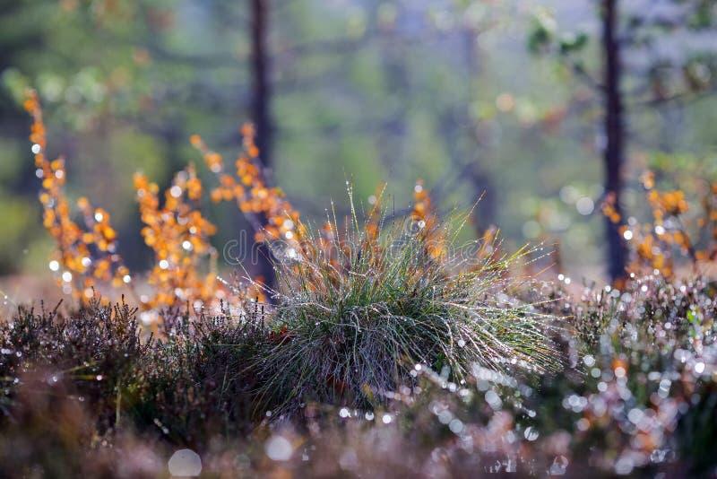 Φθινοπωρινό φόντο στοκ εικόνα