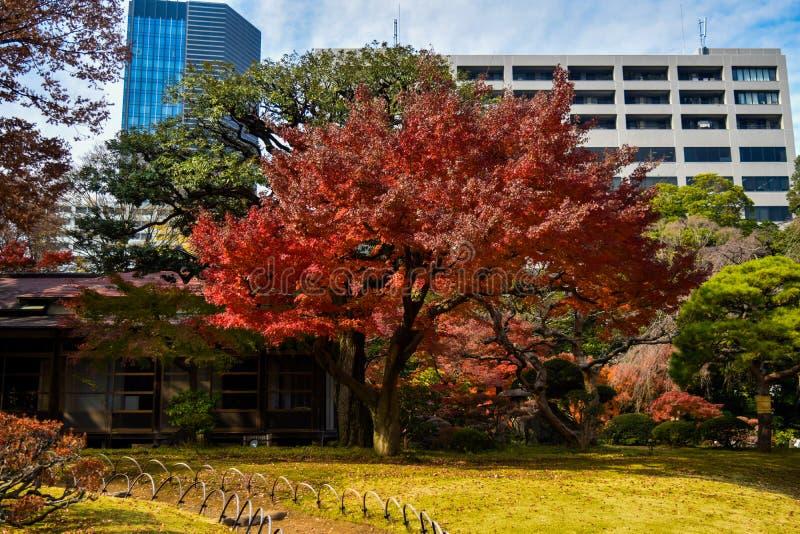Φθινοπώρου εποχής του Τόκιο Koishikawa Korakuen ζωηρόχρωμο πάρκο δέντρων σφενδάμνου κήπων κόκκινο στοκ φωτογραφία με δικαίωμα ελεύθερης χρήσης