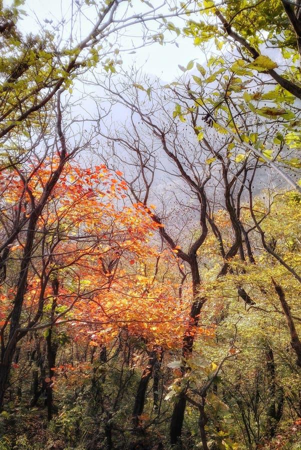 Φθινόπωρο, δάσος πτώσης στοκ εικόνα