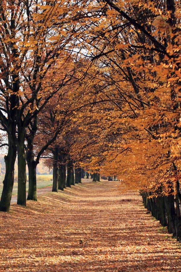 φθινόπωρο αλεών στοκ εικόνες