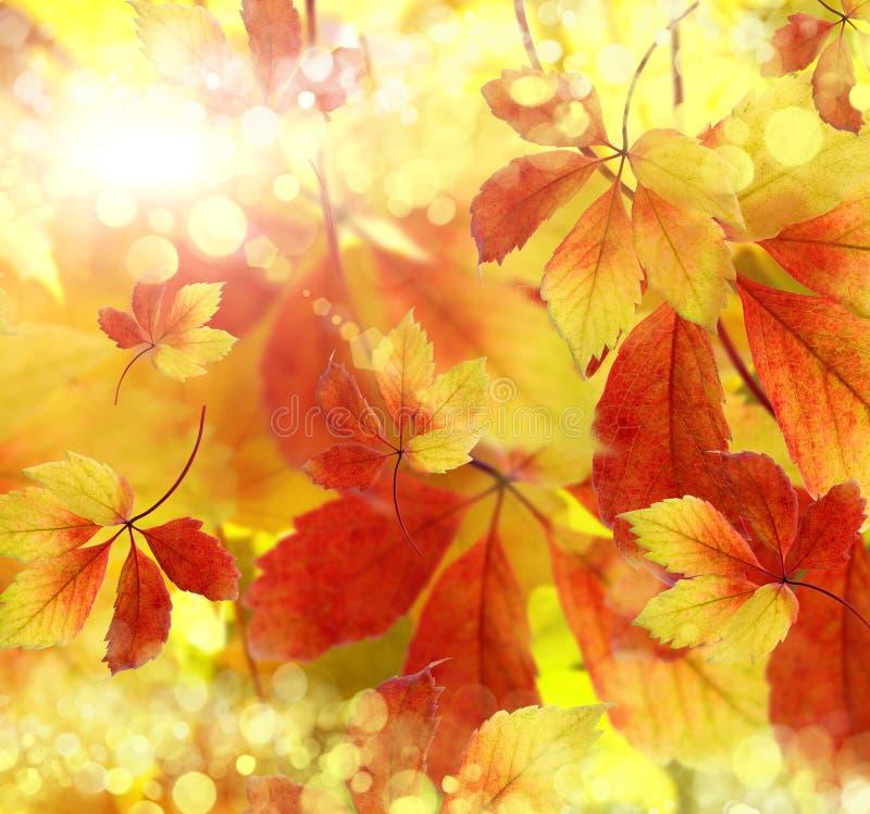 Φθινόπωρο, ανασκόπηση στοκ φωτογραφία