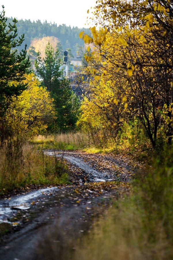 Φθινόπωρο Κίτρινα δέντρα και δασικός δρόμος πεσμένα φύλλα στοκ φωτογραφία