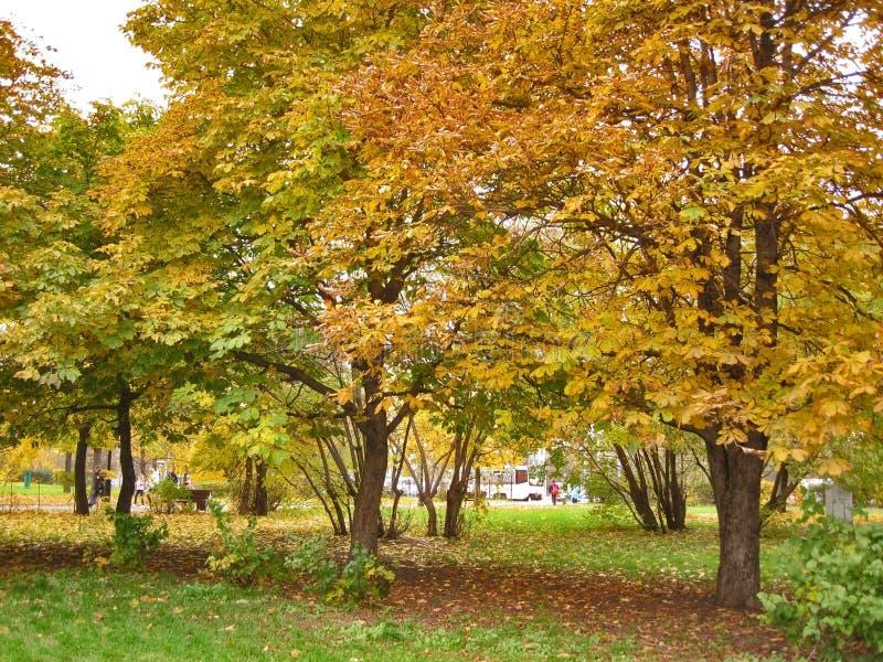 Φθινόπωρο Κίτρινα κάστανα στο τετράγωνο στοκ εικόνα