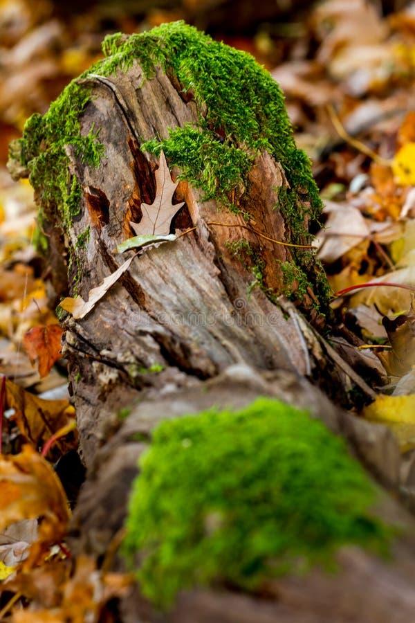 Φθινόπωρο με το βρύο σε ένα ξύλο και τα φύλλα στοκ εικόνα