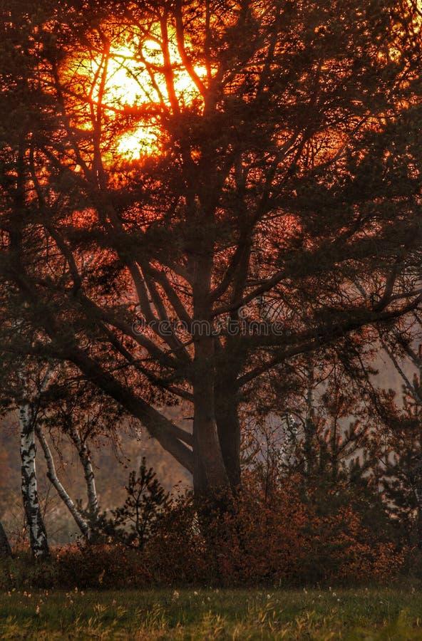 φθινόπωρο νωρίς στοκ φωτογραφία