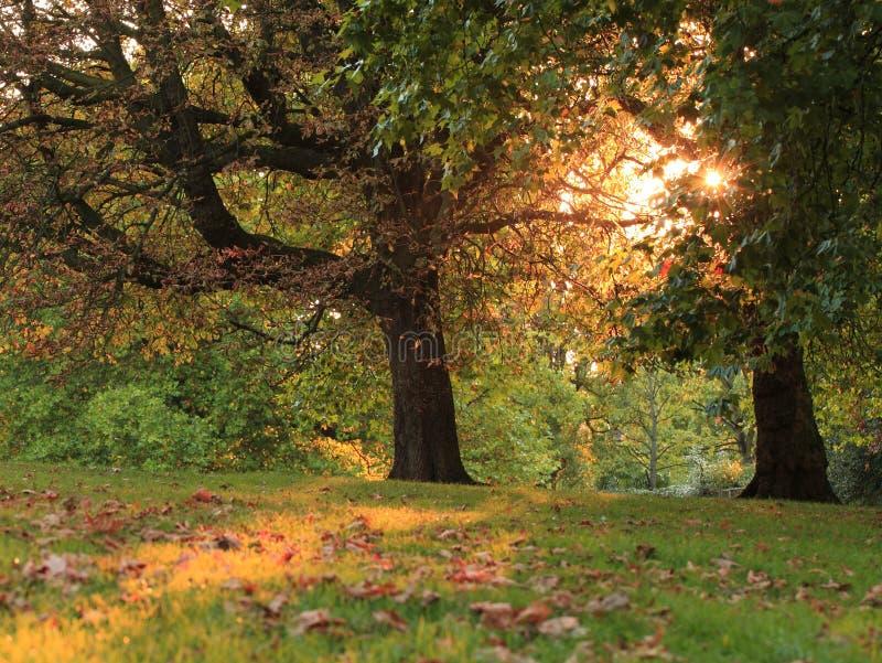 φθινόπωρο νωρίς στοκ φωτογραφίες με δικαίωμα ελεύθερης χρήσης