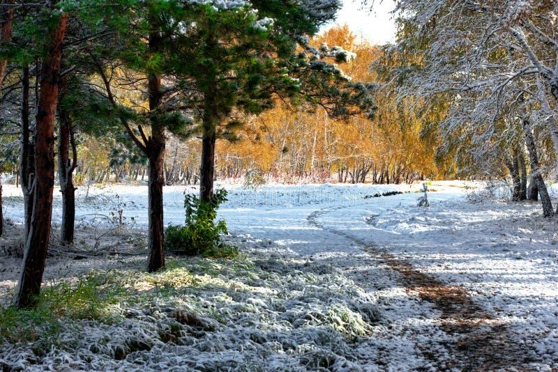 φθινόπωρο νωρίς στοκ φωτογραφίες