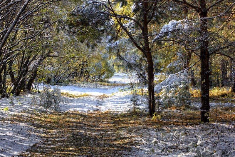 φθινόπωρο νωρίς στοκ φωτογραφία με δικαίωμα ελεύθερης χρήσης