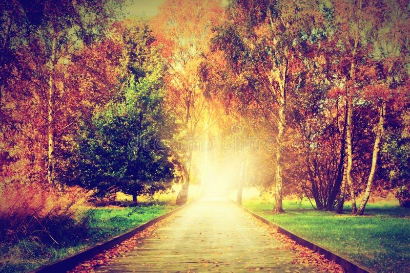 Φθινόπωρο, πάρκο πτώσης Ξύλινη πορεία προς το φως στοκ φωτογραφίες με δικαίωμα ελεύθερης χρήσης