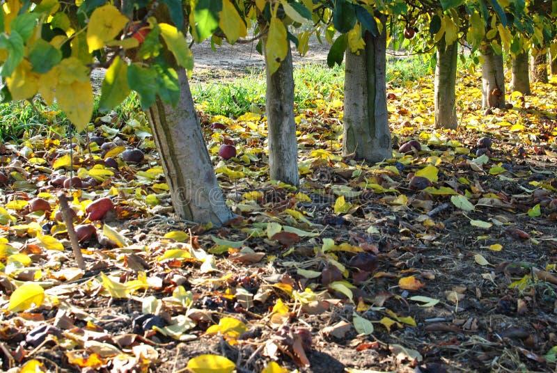 Φθινόπωρο Πεσμένα κίτρινα φύλλα στοκ εικόνες