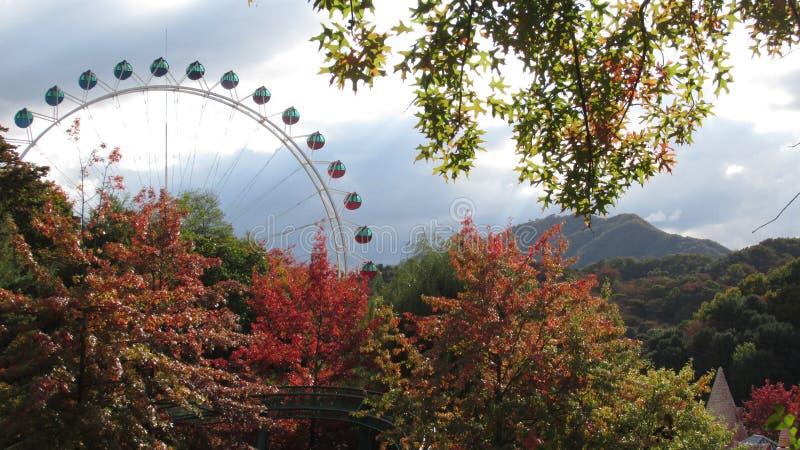 Φθινόπωρο σε Everland Νότια Κορέα στοκ φωτογραφίες