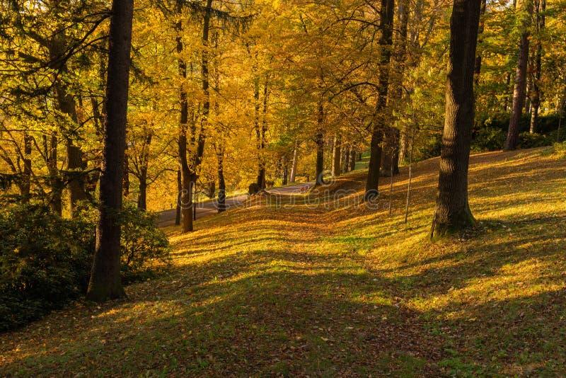 Φθινόπωρο, σκηνή πτώσης Όμορφο φθινοπωρινό πάρκο με τη διάβαση Σκηνή φύσης ομορφιάς στοκ φωτογραφίες με δικαίωμα ελεύθερης χρήσης