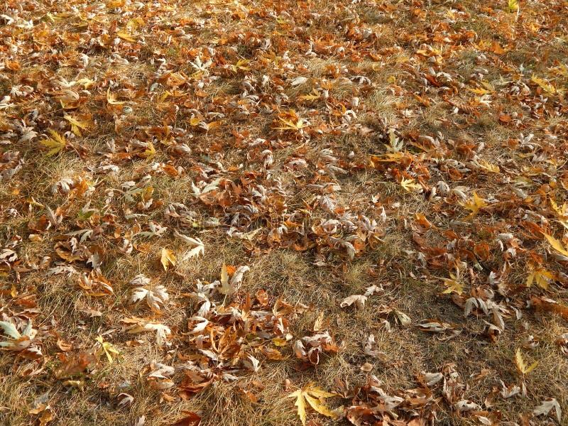 Φθινόπωρο στα κίτρινα φύλλα πόλεων το πάρκο στοκ εικόνα