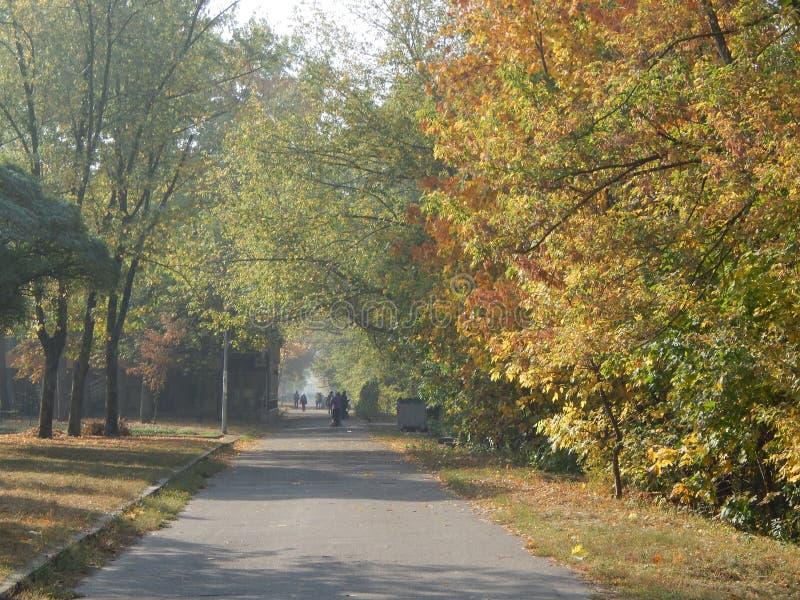 Φθινόπωρο στα κίτρινα φύλλα πόλεων το πάρκο στοκ φωτογραφίες