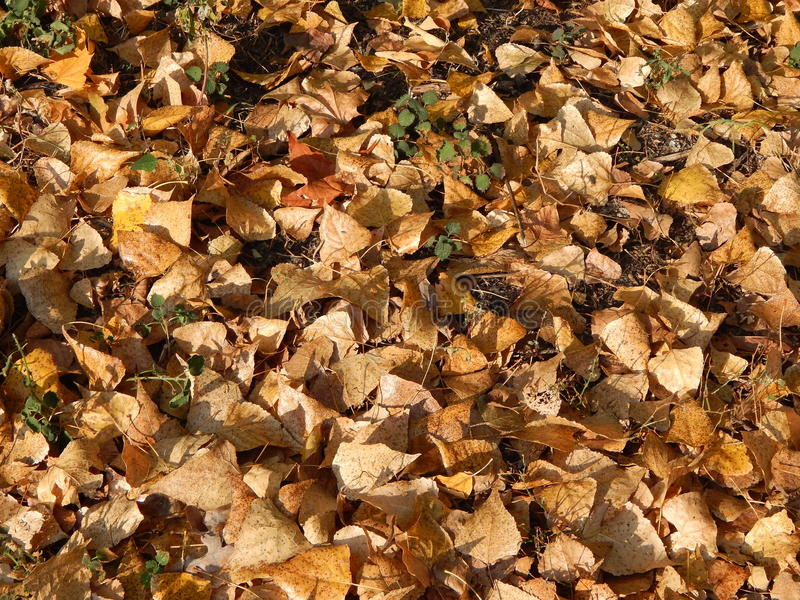 Φθινόπωρο στα κίτρινα φύλλα πόλεων το πάρκο στοκ φωτογραφία με δικαίωμα ελεύθερης χρήσης