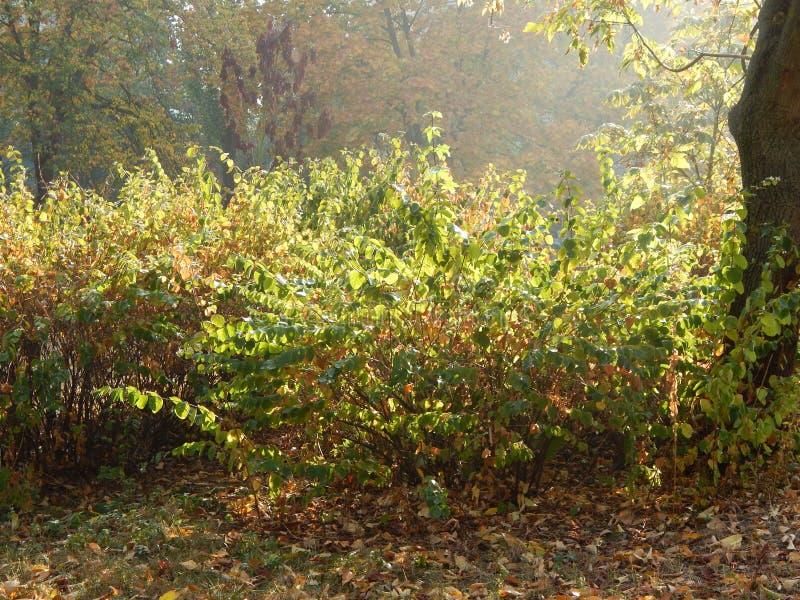 Φθινόπωρο στα κίτρινα φύλλα πόλεων το πάρκο στοκ εικόνες με δικαίωμα ελεύθερης χρήσης