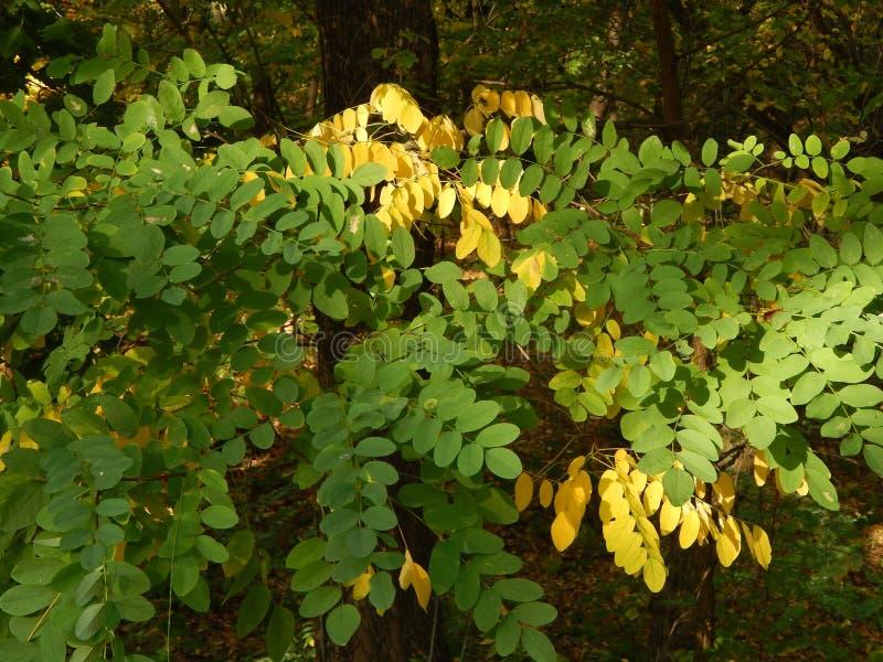 Φθινόπωρο στα κίτρινα φύλλα πόλεων το πάρκο στοκ εικόνα με δικαίωμα ελεύθερης χρήσης