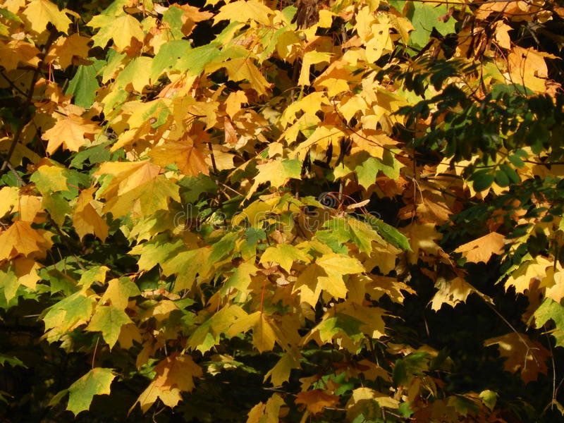 Φθινόπωρο στα κίτρινα φύλλα πόλεων το πάρκο στοκ εικόνες
