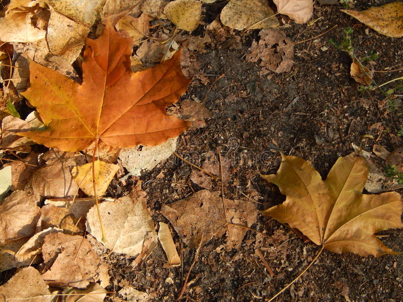 Φθινόπωρο στα κίτρινα φύλλα πόλεων το πάρκο στοκ φωτογραφία