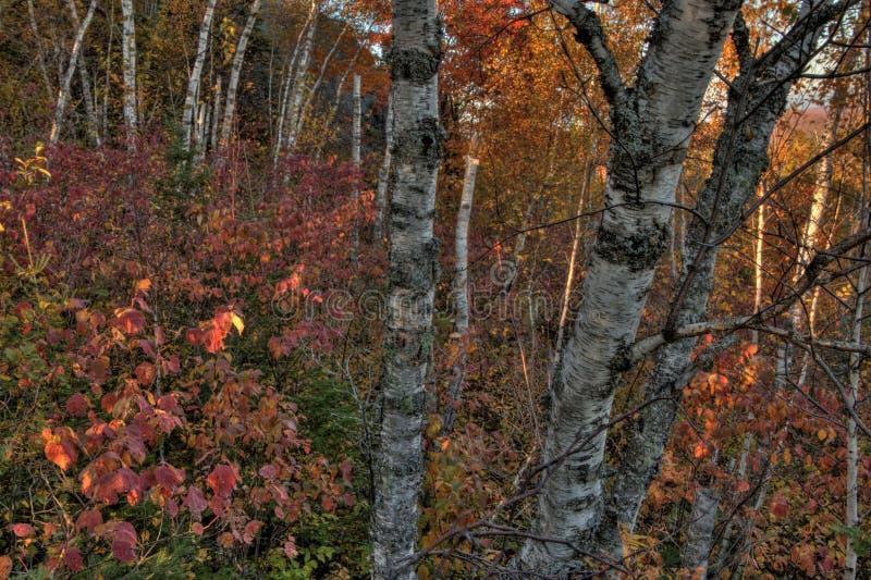 Φθινόπωρο στην αιχμή του Carlton των πριονωτών βουνών σε βόρεια Μινεσότα στη βόρεια ακτή του ανωτέρου λιμνών στοκ φωτογραφίες με δικαίωμα ελεύθερης χρήσης