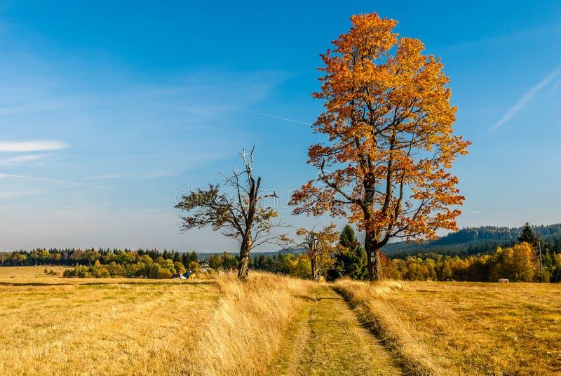 Φθινόπωρο στην Πολωνία - ζωηρόχρωμοι τομείς και δέντρα στα βουνά Stołowe στη χαμηλότερη Σιλεσία - την περιοχή Dolny Slask σε Karl στοκ εικόνα με δικαίωμα ελεύθερης χρήσης