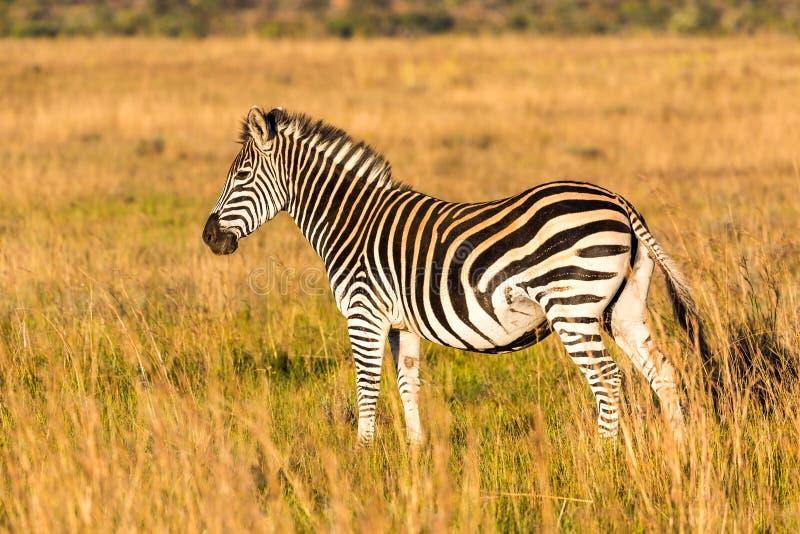 Φθινόπωρο στη Νότια Αφρική στοκ φωτογραφία με δικαίωμα ελεύθερης χρήσης