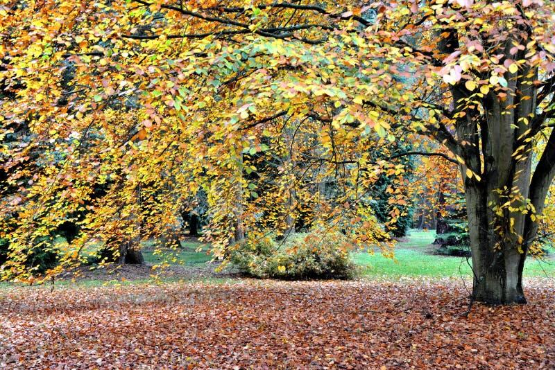 Φθινόπωρο στο δενδρολογικό κήπο Lynford στοκ εικόνες