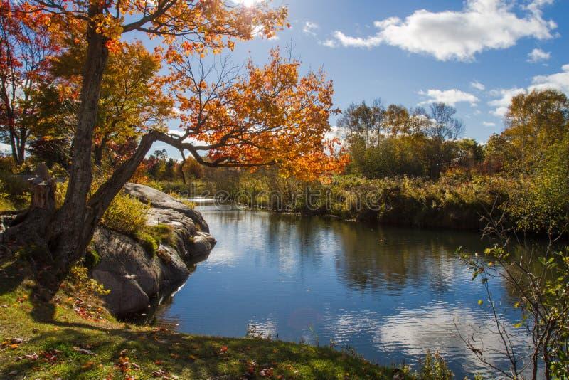 Φθινόπωρο στο επαρχιακό πάρκο Οντάριο Καναδάς Killarney στοκ φωτογραφίες