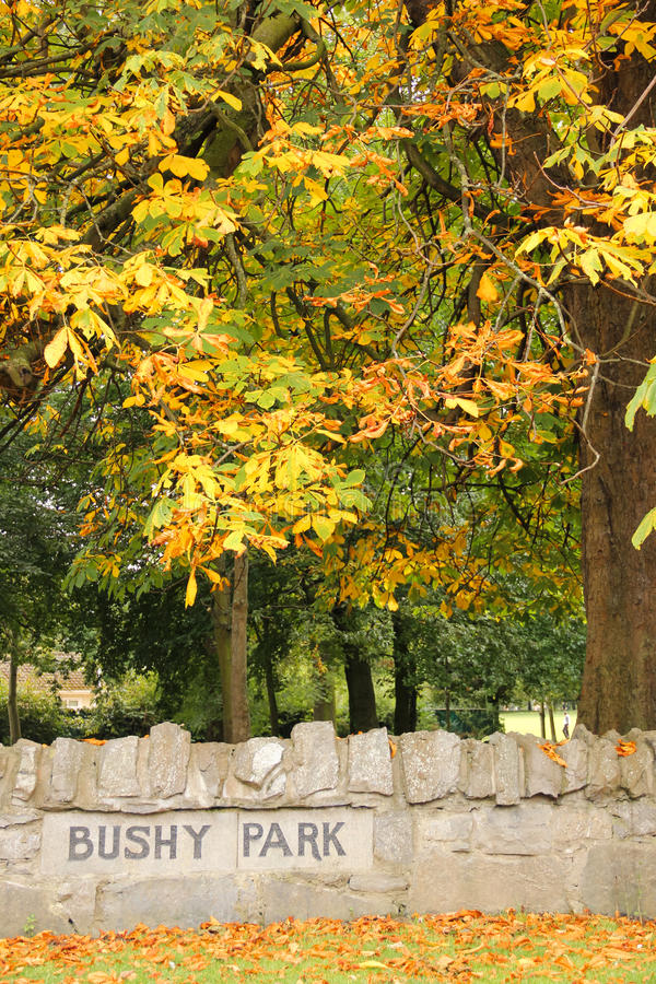 Φθινόπωρο στο θαμνώδες πάρκο. Δουβλίνο. Ιρλανδία στοκ εικόνες