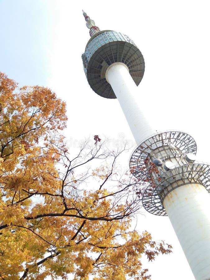 Φθινόπωρο στο πάρκο Σεούλ Κορέα πύργων Namsan στοκ φωτογραφίες με δικαίωμα ελεύθερης χρήσης