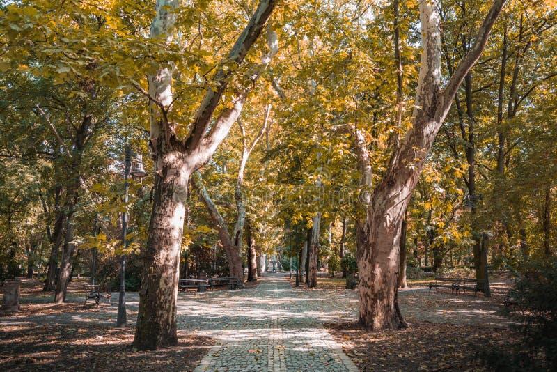 Φθινόπωρο στο πάρκο, όμορφο τοπίο φθινοπώρου, δύο δέντρα με τα χρυσά φύλλα στοκ εικόνες