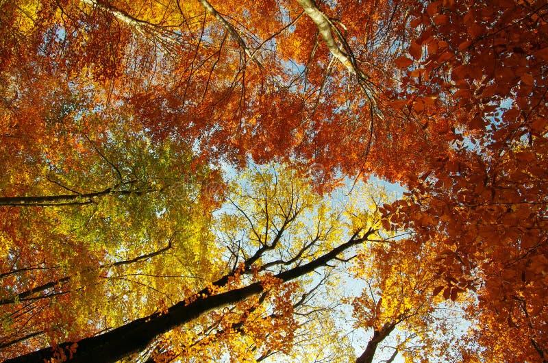 Φθινόπωρο στο ύψος στοκ εικόνα με δικαίωμα ελεύθερης χρήσης