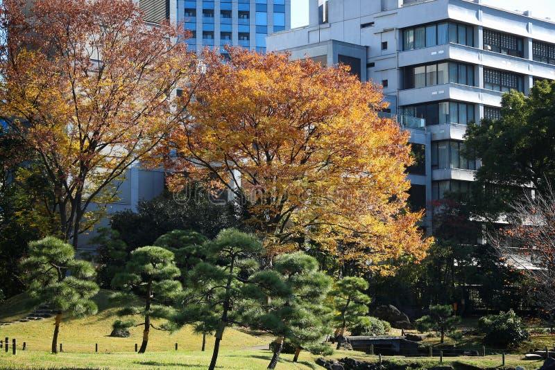 Φθινόπωρο του Τόκιο στοκ φωτογραφία με δικαίωμα ελεύθερης χρήσης