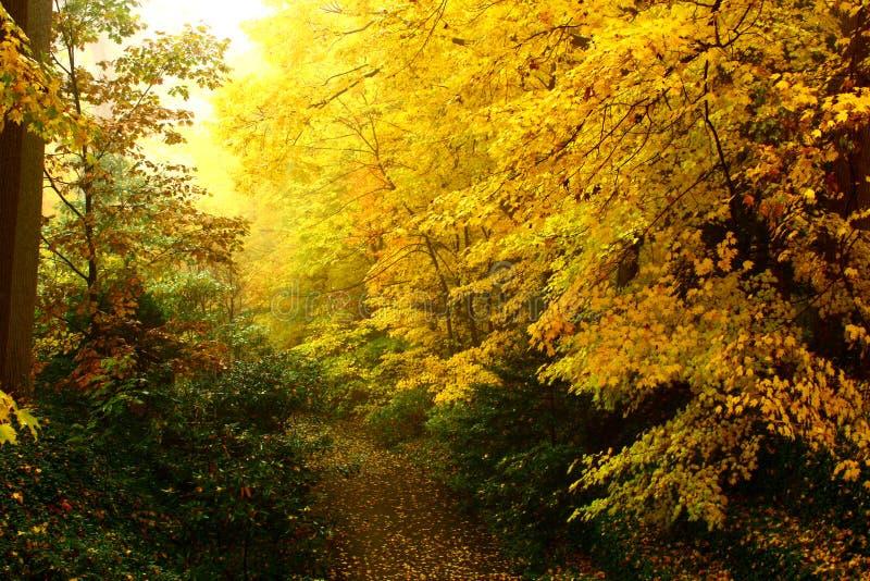 φθινόπωρο το πιό forresτο στοκ εικόνες