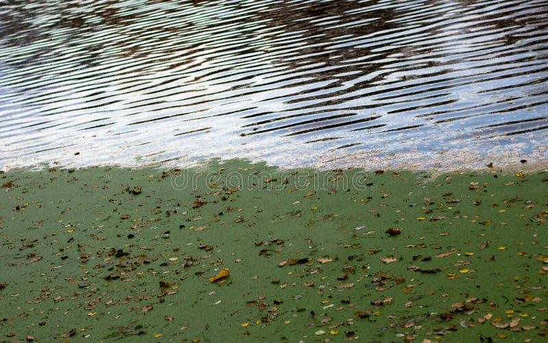 Φθινόπωρο φυλλώματος στοκ εικόνες