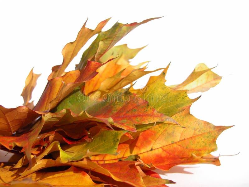 Download φθινόπωρο στοκ εικόνα. εικόνα από εγκρατές, σφένδαμνος, δέντρα - 54673