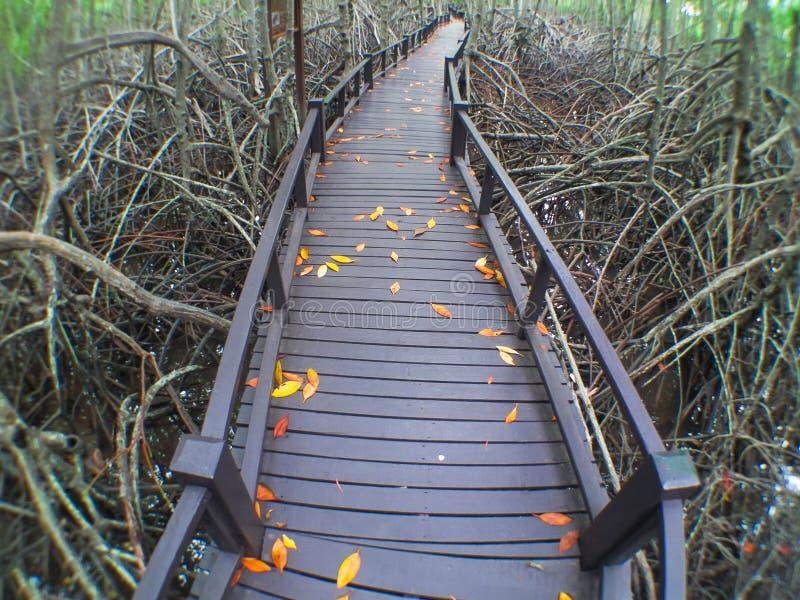 Download Φθινόπωρο στοκ εικόνα. εικόνα από δάσος, ζούγκλα, δάση - 62708401