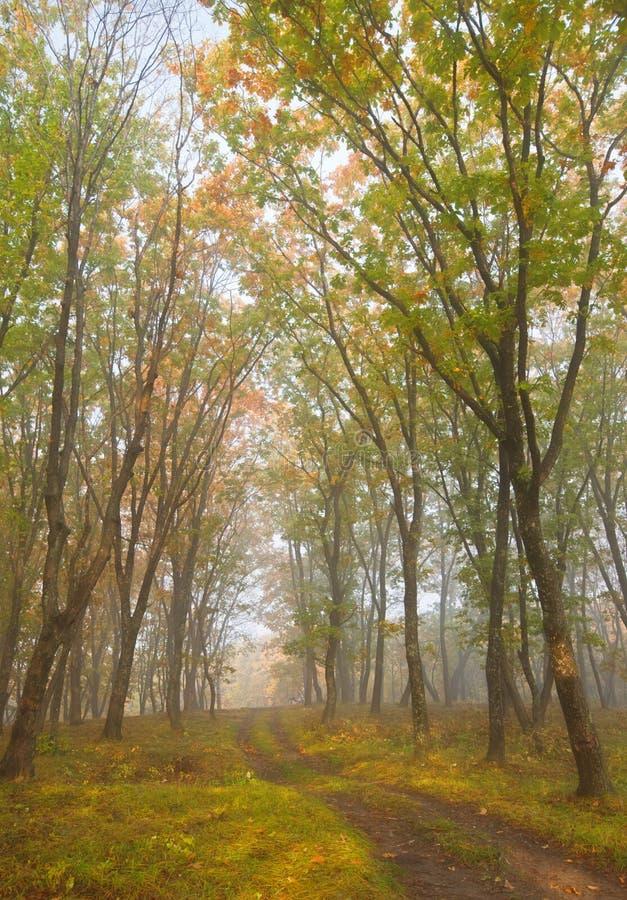 Φθινόπωρο bokeh 3 στοκ εικόνες