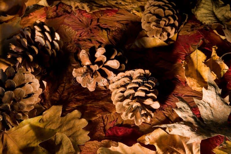 φθινόπωρο pinecones στοκ εικόνες