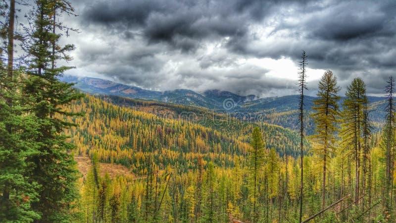 Φθινόπωρο Tamaracks με το θυελλώδη ουρανό στοκ εικόνα