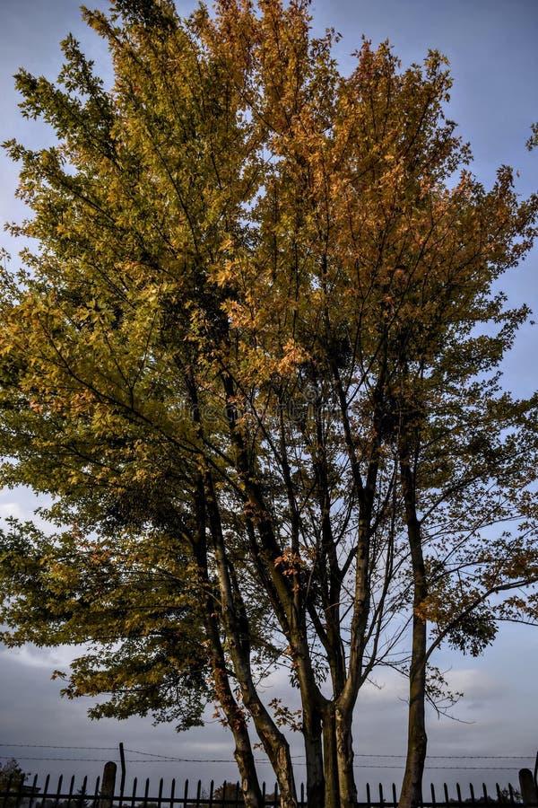 Φθινόπωρο, tre, χρώματα, στοκ εικόνες